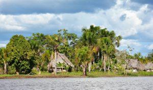 Peru Iquitos Amazone Mango Travel